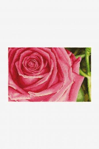 Rose Kit