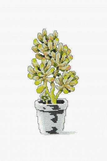 Nature cactus - Diagramme point de croix