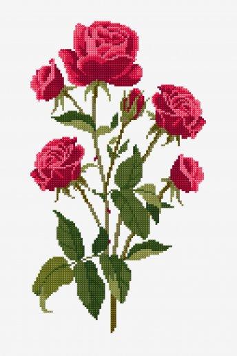 Roses - Diagramme point de croix