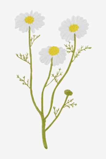 Camomile - pattern