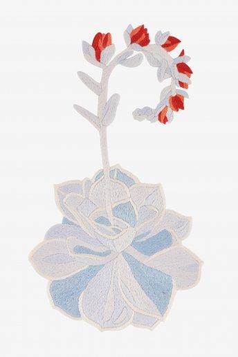 Flowering Echeveria - pattern