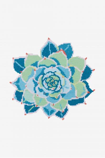 Turquoise Echeveria Succulent - pattern