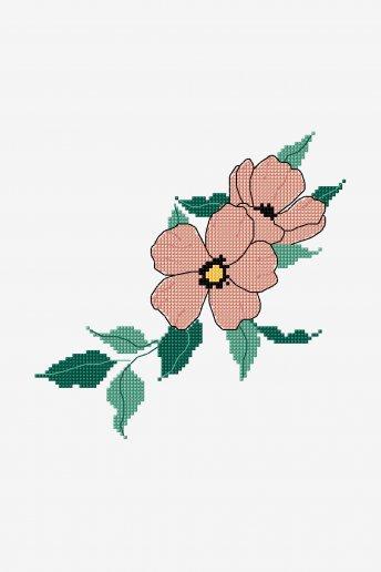 Rosa selvagem - ESQUEMA