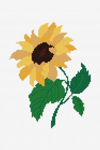 Sunflower - pattern