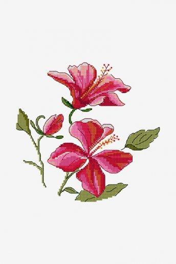 Hibiscus - pattern