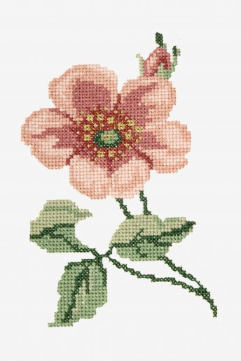 Anemone - pattern