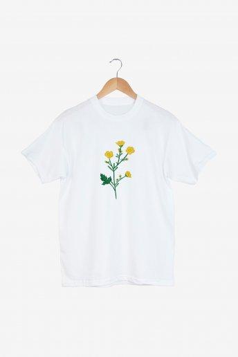 Ranunculus - ESQUEMA