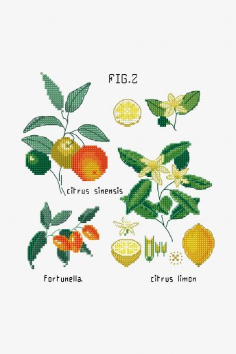 Botanical Citrus
