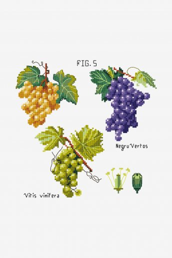 Botanical Grapes