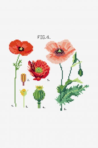 Botanical Poppies