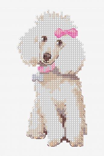 Poodle - pattern