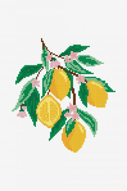 Limoni - Schema