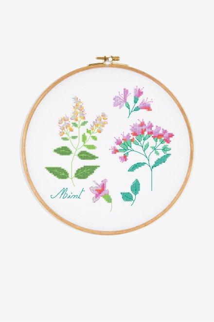 Herbs - Mint